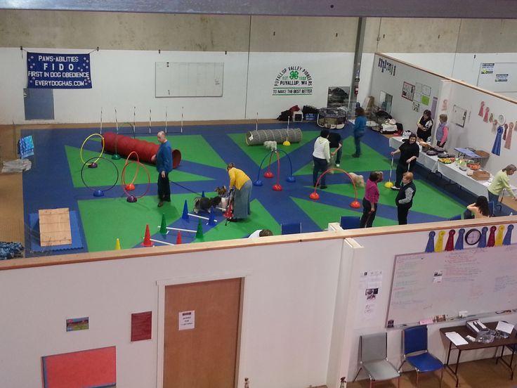 8 best images about doggie jungle gym on pinterest pets