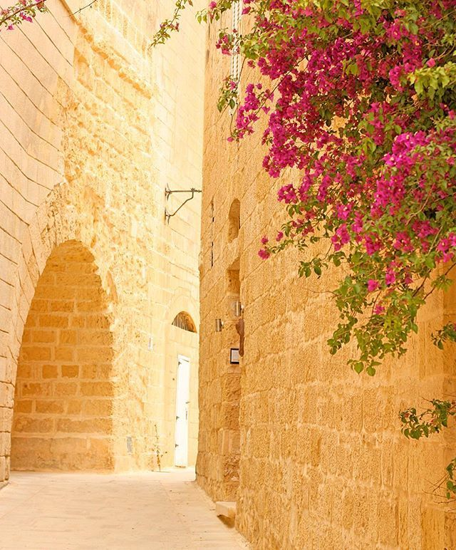 #bougainvillea #alley #village #cobblestone #historic #oldtown #throwback #mdina #worldinbloom #flowers #bloom #colors #visitmalta #igersmalta #lovemalta #unlimitedmalta #maltaphotography