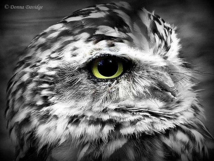 #uil #ogen #zwartwit
