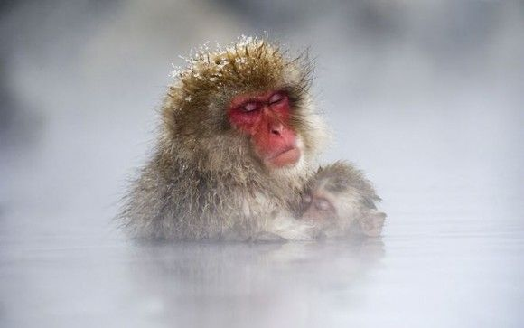 Photograph by Justin Doest taken in Japan - A mother monkey with her child