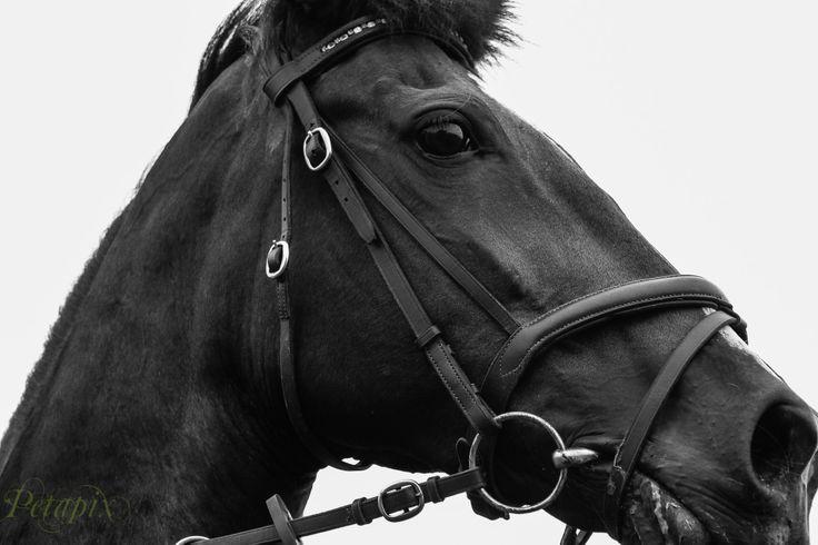 Equine Trader Vetpro Photo of the Week entrant - PJ Renshaw