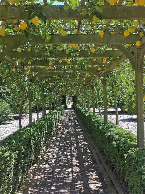 Lotusland Lemon Arbor | Landscaping Ideas | Pinterest ...