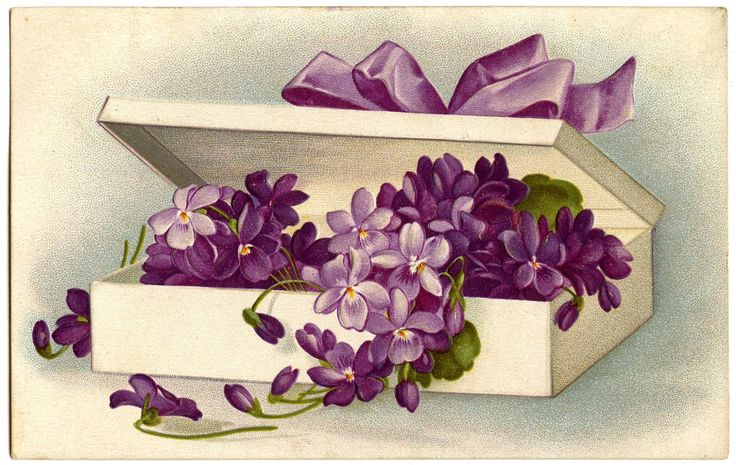 Vintage Image - Violets in Fancy Box - The Graphics Fairy