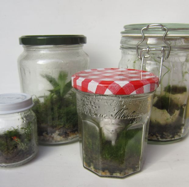 The Basics of Closed Jar Terrariums