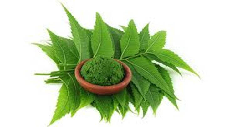 The Neem tree (Latin: Azadirachta Indica), also known as Indian Lilac, is an evergreen tree that is found just about [Read More...]
