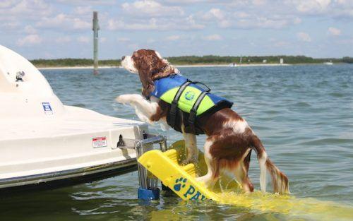 DoggyBoatLadder