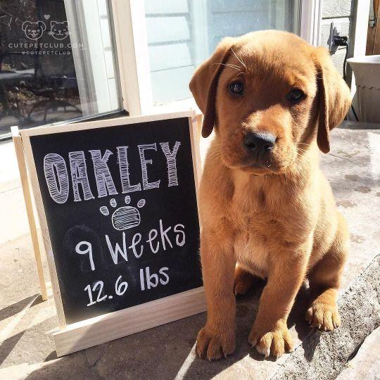 best 25 puppy photo ideas ideas on pinterest picture of