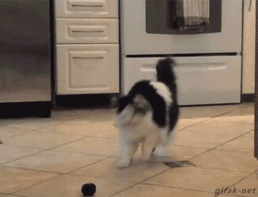 entirelypets:  This #cat is totally freaking out over this toy! =)  Follow The best cat GIFs and videos!