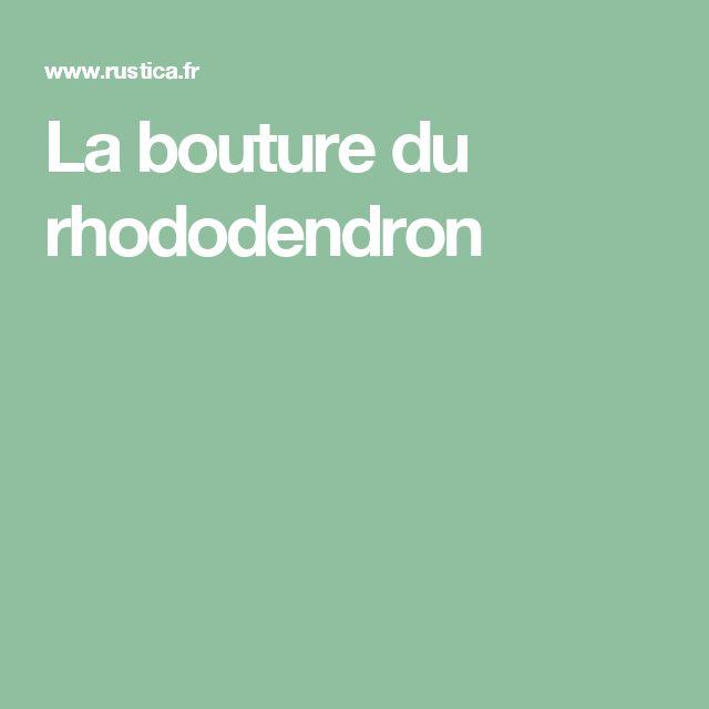 La bouture du rhododendron