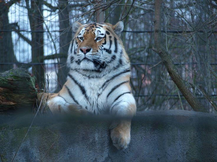 Korkeasaari Zoo.