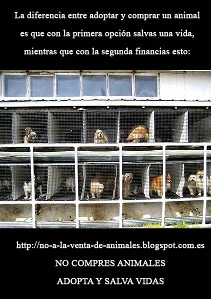 Contra la venta de cachorros de perros bull dog frances Barcelona
