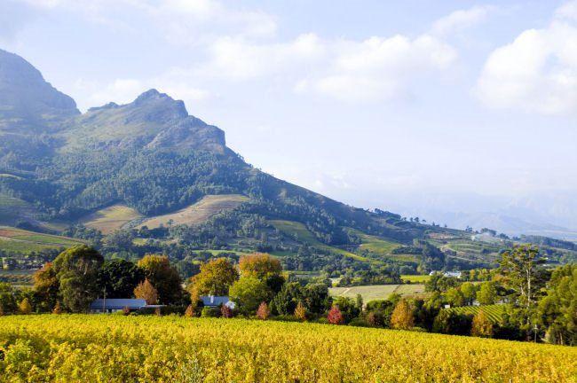 Wine-tasting honeymoons; South Africa