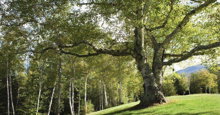 Deciduous Forest Colorado | Cities in Temperate Deciduous Forests | eHow UK