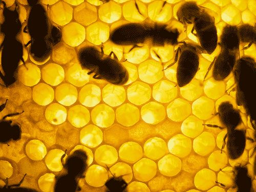 Health benefits of Honey.....Skin Care, Immune System, Cough Remedies, Allergies Remedies, Health Benefits, Face Masks, Honey Bees, Honeycombs, Nature Beautiful Tips