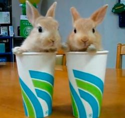 Ummm, Excuse me but there's a couple Hares in my cup~