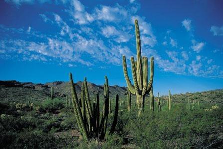 http://www.biyolojidersnotlari.com/biyoloji-dersi-bilincli-birey-yasanabilir-cevre.html Çevre Sorunları Canlılar içinde bulundukları çevrede meydana gelebilecek değişikliklerden olumlu ya da olumsuz etkilenir...