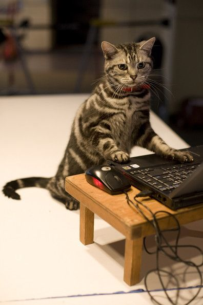 What, I'm not playing with the mouse honest, just googling catnip that's all.