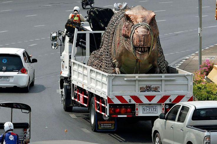 Chargement effrayant: à Bangkok, une maquette de tyrannosaure de 13 mètres de long est transportée par la route jusqu'à sa dernière demeure, le parc d'attractions «Dinosaur Planet». Il ressemble à s'y méprendre à un vrai dinosaure. Est-ce pour cela qu'on lui a muselé la gueule afin de tranquilliser les passants?