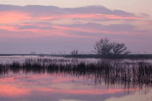 Wetlands Dawn - Central Valley, California (2017)  #PhotoManiaUSA is curated ...