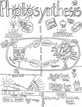 Photosynthesis Ver1 Sketch Notes Doodle Notes W/Teacher's