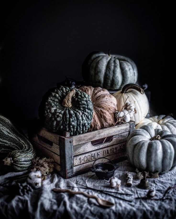 Oh hey. We're getting seasonal AF because it's decorative gourd season. Let's celebrate it with my favorite piece of writing from McSweeney's welcoming autumn and its nip in the air, corn fields, and mutant squash. Because it's not summer, it's not winter, and it's not spring. It's fall... Google decorative gourd season to give it a read. Because it's totally not an appropriate piece of writing to quote here. It's our fall tradition. What's yours? 😁 #fallyall #itsdecorativegourdseason…