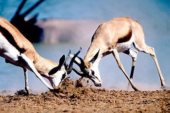 Kalahari Safari - Gobabis - Namibia