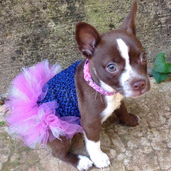 Best 25 dog tutu ideas on pinterest girl dog costumes Dog clothes design your own