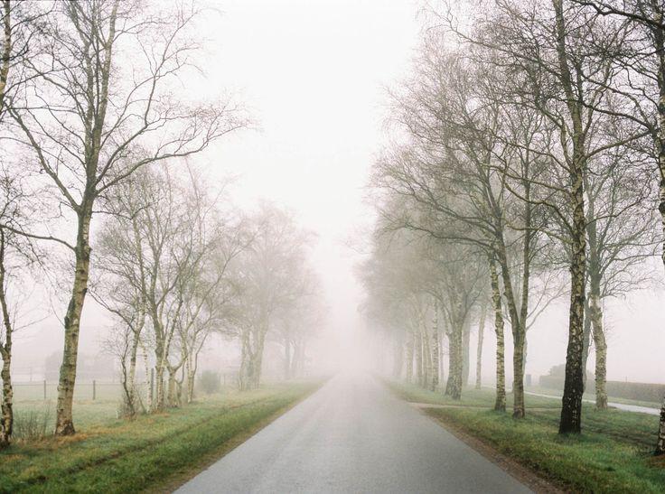 #Fog #Analog #Drenthe
