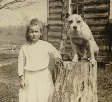 -lots of vintage pictures of dogs look like some form of pitbull. sisterannie19