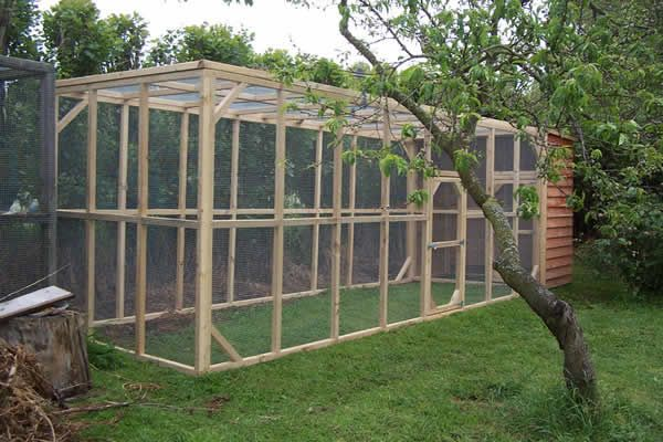 The 25 best bird aviary ideas on pinterest diy budgie for Chicken enclosure ideas