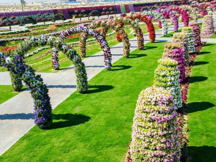 Things to do in Dubai - Visiting the Miracle Garden