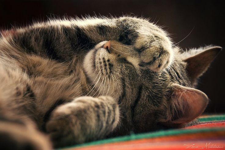 poze pisici frumoase dragute cute cats fluffy photos ianuarie 2015  fotografii haioase amuzante imagini cu pisicute
