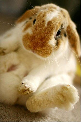 Yes I know Im cute. Share your #bunny stories with www.bunny-stories.com