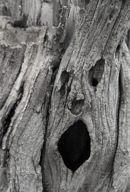 screaming tree