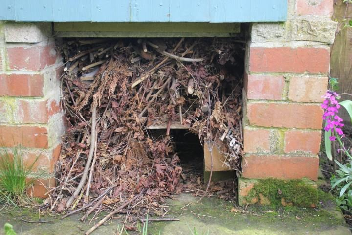 Hedgehog house. DIY tips for building a hedgehog house for wild hedgehogs in your garden. This simple one is made from a framework of bricks under a log store. It is topped with twigs and branches. Line the house with hay to give the hedgehog a helping hand with their new home.