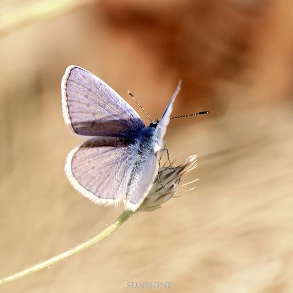 44 best Butterflies images on Pinterest | Butterflies, Butterfly ...