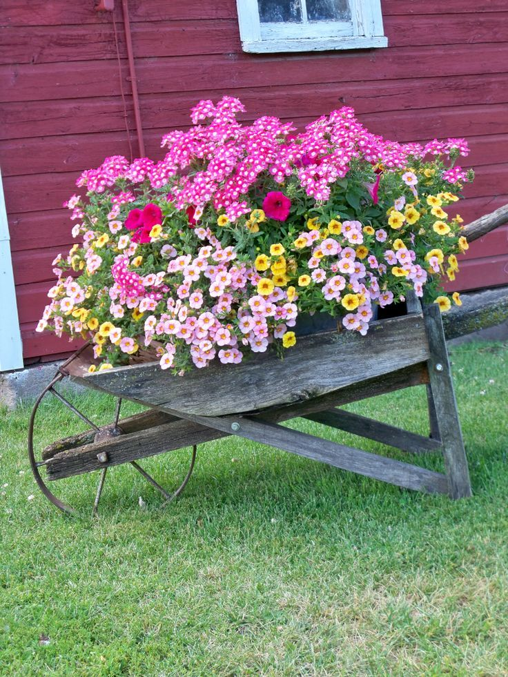 Wheelbarrow with flowers.                                                       …