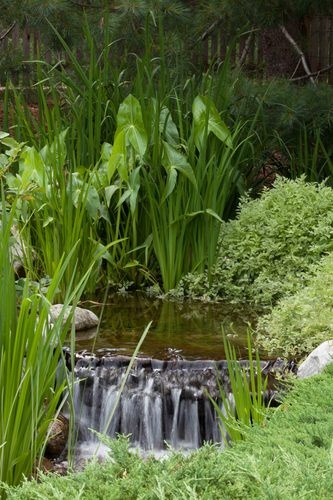 78 images about pond bog filter ideas and designs on for Plants for pond filtration