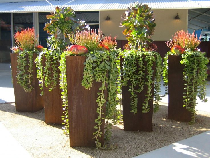 Great display of succulents in tall rusted steel containers from ore containers.com