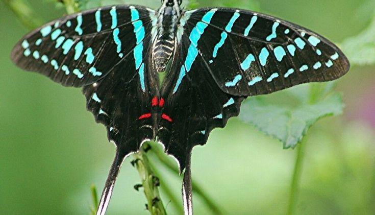 24 Beautiful Butterflies and Moths