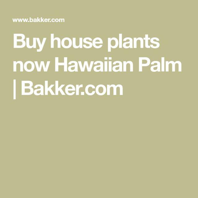 Buy house plants now Hawaiian Palm | Bakker.com