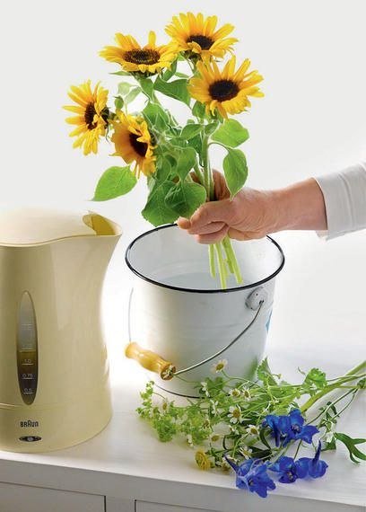 Stauden und Sommerblumen aus dem Garten sind ein hübscher Vasenschmuck. Wir zeigen Ihnen, wie Sie Ihre Schnittblumen frisch halten und schöne Sträuße selber binden können.
