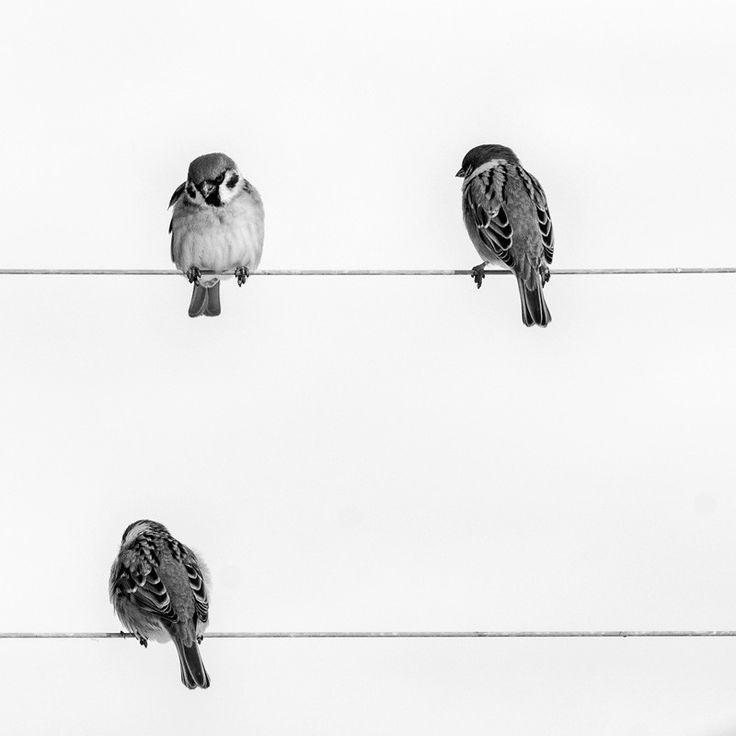 Photo d'oiseau noir et blanc, acheter photographie de nature
