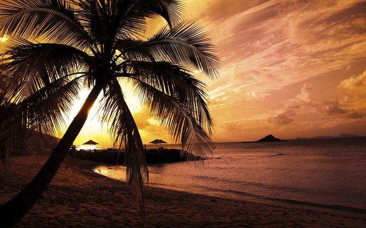 Пальмы, пальма, пляжи, песок, вода, океан, море, берег, пейзажи обои, картинки, фото