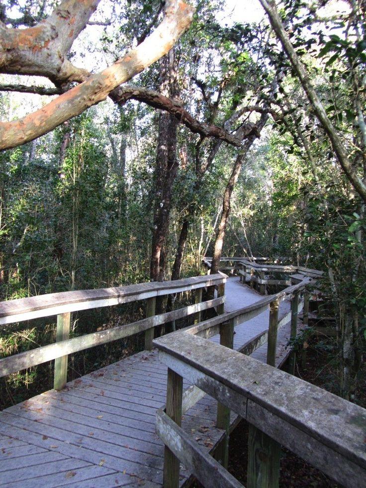 Reisebericht unserer Rundreise durch Florida im April 2014. Air Boat Tour durch die Mangroven-Wälder, Alligatoren und Indianer in den Everglades