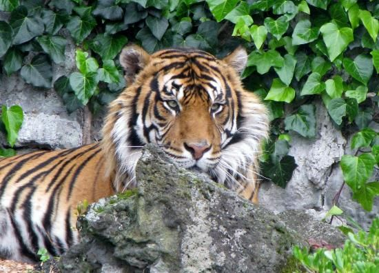 Auckland Zoo - Auckland Central, New Zealand