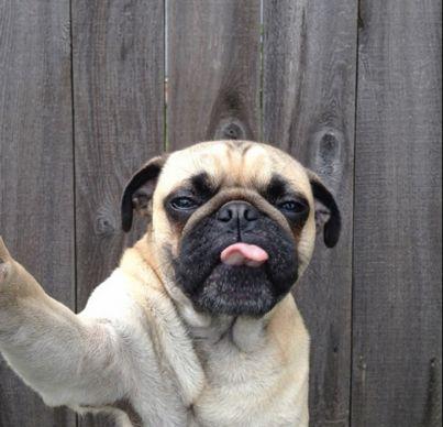 Foto Selfie Hewan Paling Lucu - Hai Bro..! Demam selfie bukan hanya terjadi pada generasi remaja