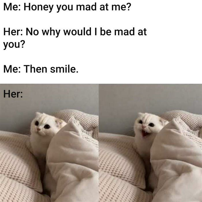 Are You Mad Pictures Cat Memes Mad Meme Funny Memes