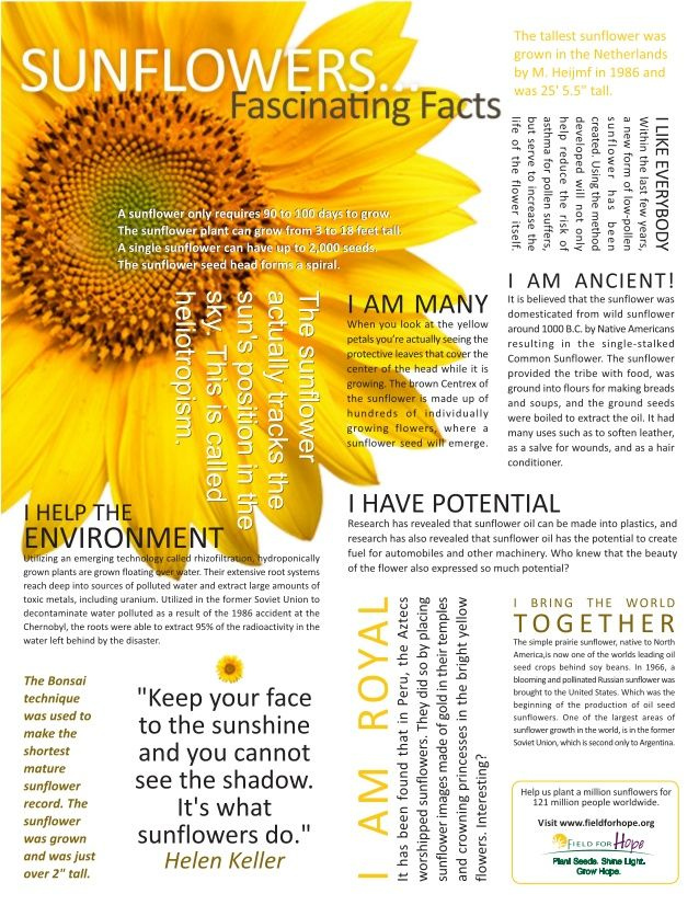 fascinating-facts-on-sunflowers-1-638.jpg (638×826)                                                                                                                                                                                 More