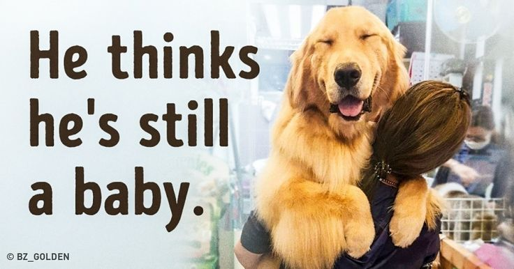 15Magnificent Dogs Who Have NoIdea How Enormous They Are